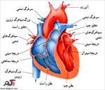 قلب-و-عملکرد-آن