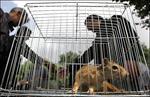 تحقیق-کنوانسیون-تجارت-بین-المللی-گونه-های-جانوران-و-گیاهان-وحشی-در-معرض-خطر-انقراض-و-نابودی-cites